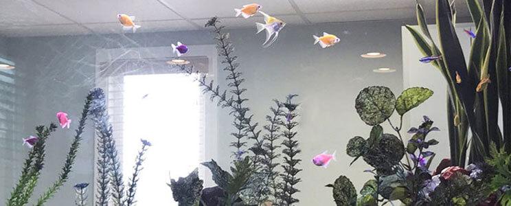 Fishtank Image
